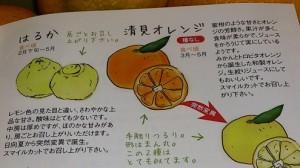 旬の晩柑8